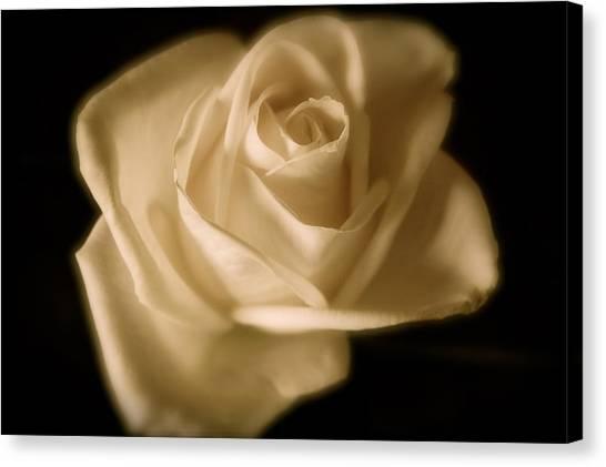 Katie's White Rose Canvas Print