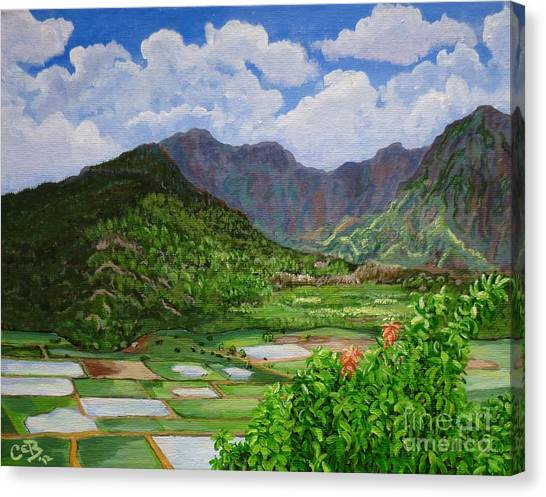 Kauai Taro Fields Canvas Print