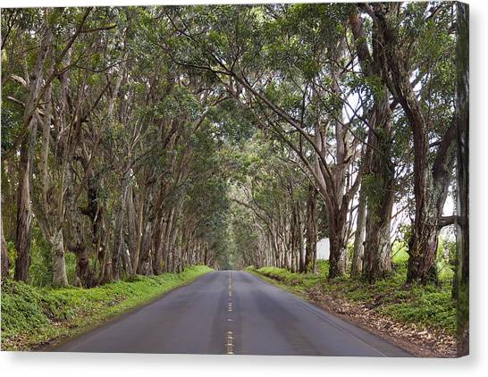 Kauai Tree Tunnel Road Canvas Print