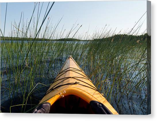 Kayaks Canvas Print - Kayaking Through Reeds Bwca by Steve Gadomski