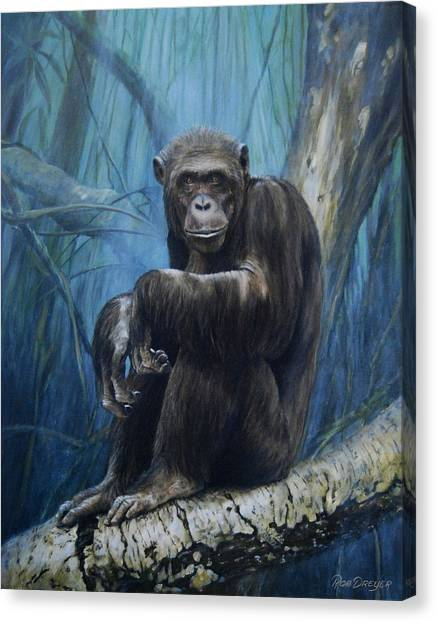 Monkeys Canvas Print - Keeper Of The Congo by Dreyer Wildlife Print Collections