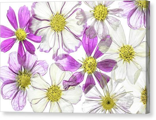 Keeping Summer Canvas Print by Mandy Disher