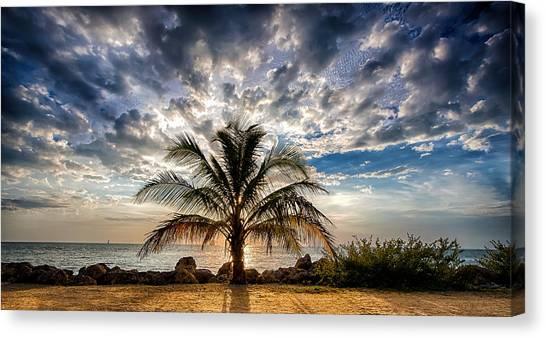 Key West Florida Lone Palm Tree  Canvas Print