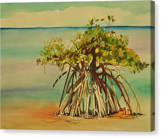 Mangrove Trees Canvas Print - Keys Mangrove by Terry Arroyo Mulrooney