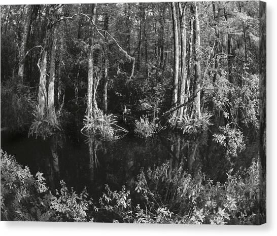 Kiev Swamp Canvas Print