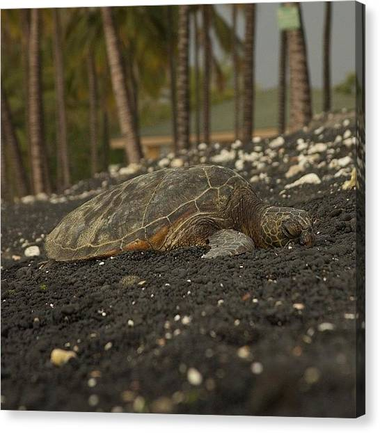 Hawaii Canvas Print - Kiholo Bay Turtle Rest Area #hawaii by Brian Governale