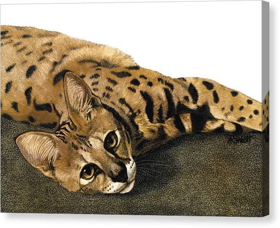 Kili Man Jaro Canvas Print