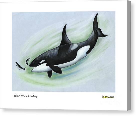 Killer Whale Feeding Canvas Print