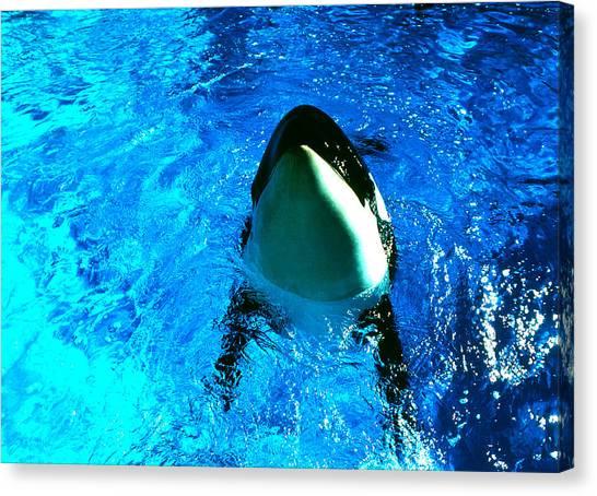 Killer Whale Greeting Canvas Print by Robert  Rodvik