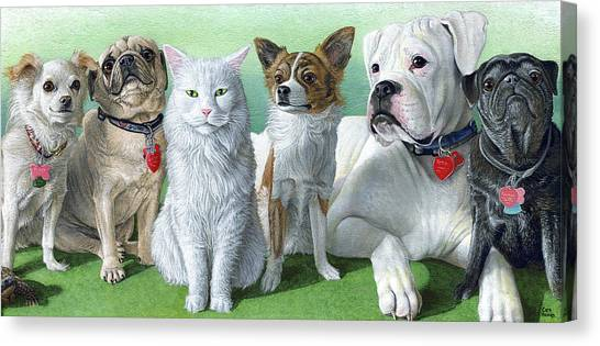 Main Coons Canvas Print - Kimberlin Crew by Cara Bevan