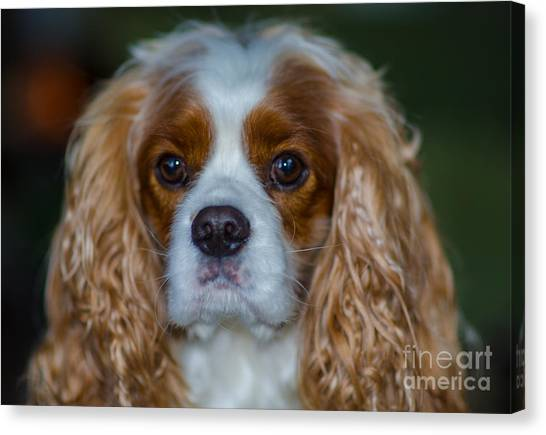King Charles Canvas Print