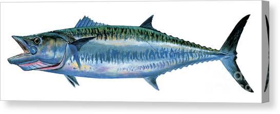 Yamaha Canvas Print - King Mackerel by Carey Chen