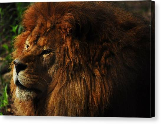 King Of The Jungle Canvas Print by Valarie Davis