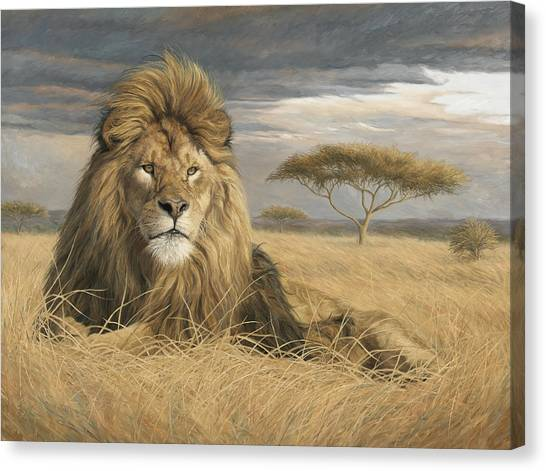 Lions Canvas Print - King Of The Pride by Lucie Bilodeau