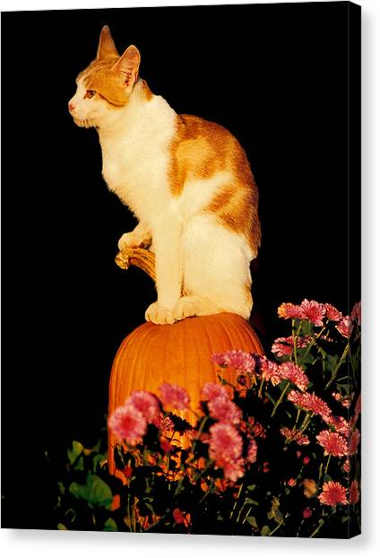 King Of The Pumpkin Canvas Print