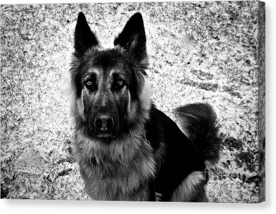 King Shepherd Dog - Monochrome  Canvas Print