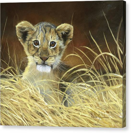 Lions Canvas Print - King To Be by Lucie Bilodeau