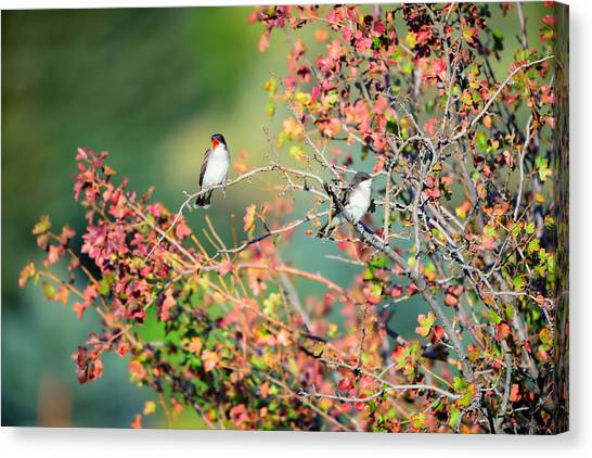 Canvas Print featuring the photograph Kingbird Pair by Greg Norrell