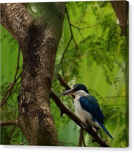 Kingfisher Canvas Print - #kingfisher #birdlover #birdofthailand by Patta Vangtal