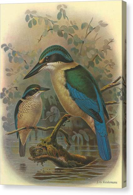 Kingfisher Canvas Print - Kingfisher by Dreyer Wildlife Print Collections