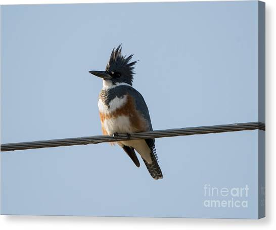 Kingfisher Canvas Print - Kingfisher Profile by Mike Dawson