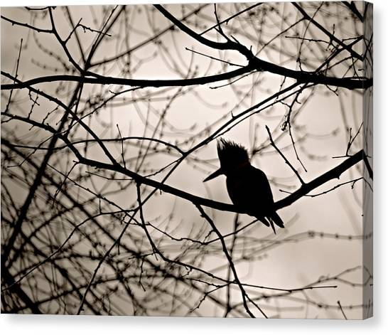 Kingfisher Silhouette Canvas Print