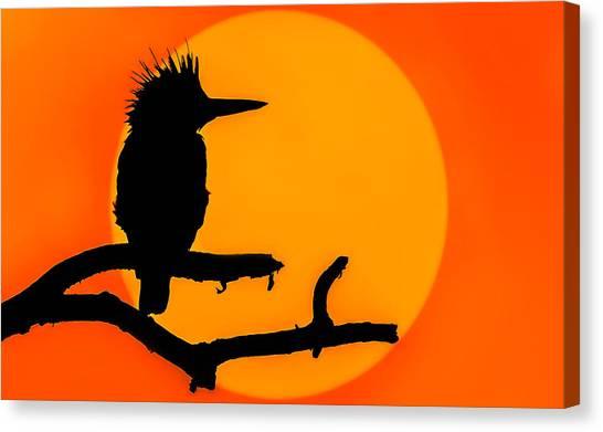 Kingfisher Sunset Canvas Print