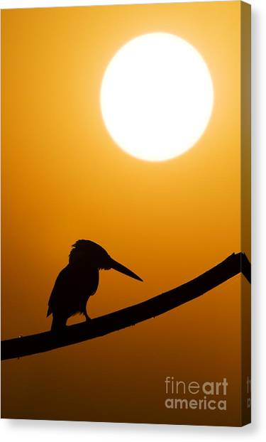 Kingfisher Canvas Print - Kingfisher Sunset Silhouette by Tim Gainey