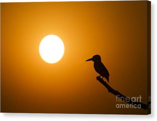 Kingfisher Canvas Print - Kingfisher Sunset by Tim Gainey