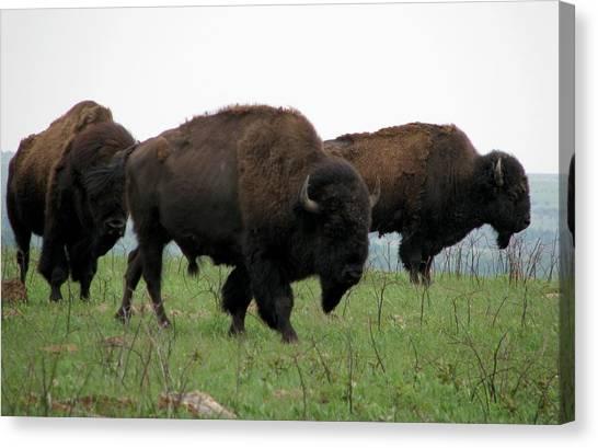 Kings Of The Prairie Canvas Print