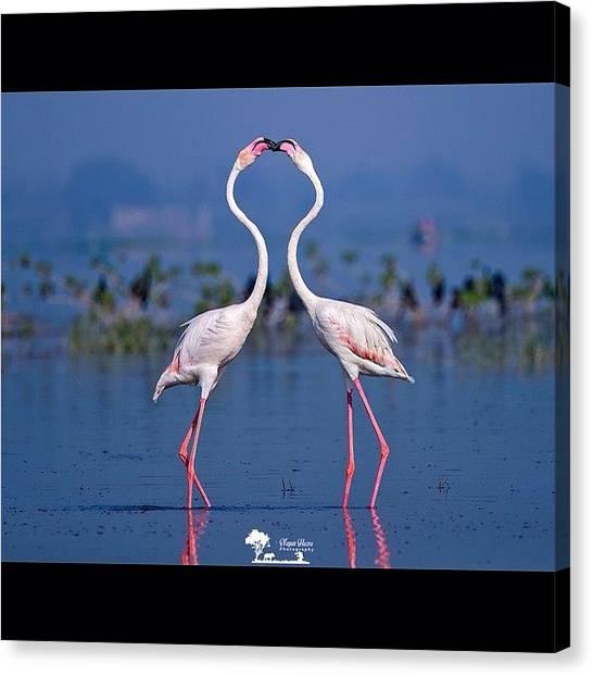 Flamingos Canvas Print - Kiss Of War  Ancient Egyptians by Nayan Hazra