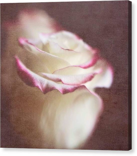 Roses Canvas Print - Kissed With Love #love #rose by Scott Pellegrin