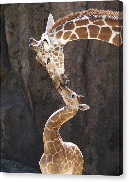 Kissing Giraffes Canvas Print by Jf Halbrooks