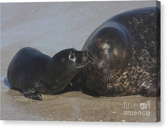 Kissing Seals Canvas Print