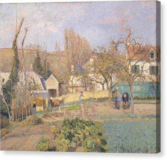 Cabbage Canvas Print - Kitchen Garden At The The Lhermitage, Pontoise, 1874 Oil On Canvas by Camille Pissarro
