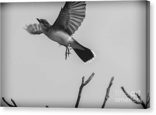 Kite... Canvas Print
