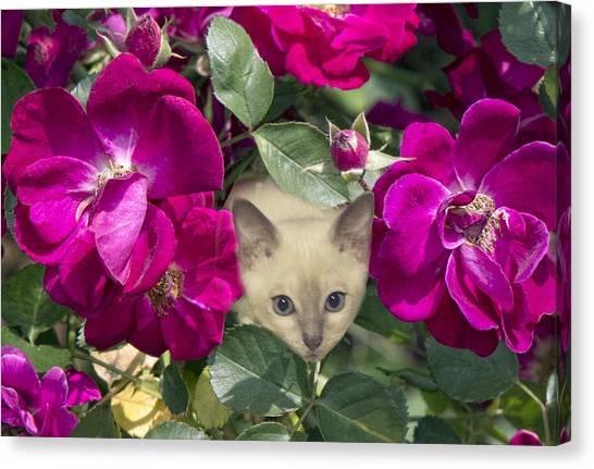 Pink cat canvas prints page 14 of 118 fine art america pink cat canvas print kitten among pink roses by linda phelps mightylinksfo