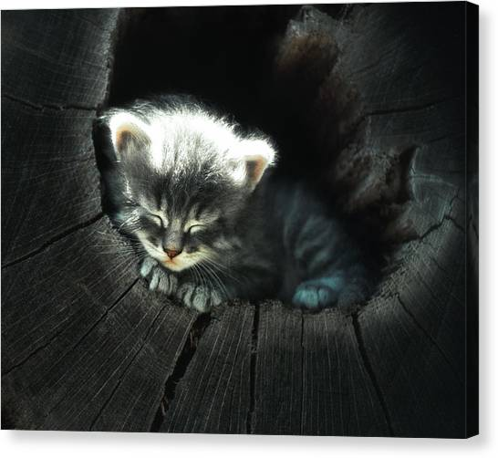 Kitten In A Log Canvas Print