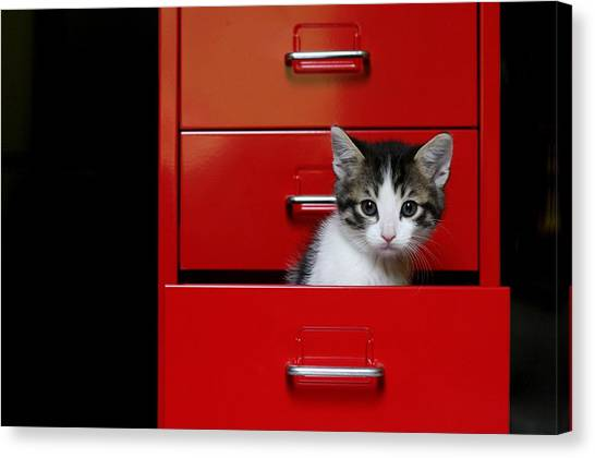 Drawers Canvas Print - Kitten In A Red Drawer by © Nico Piotto
