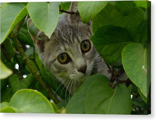 Canvas Print featuring the photograph Kitten In The Bushes by Scott Lyons