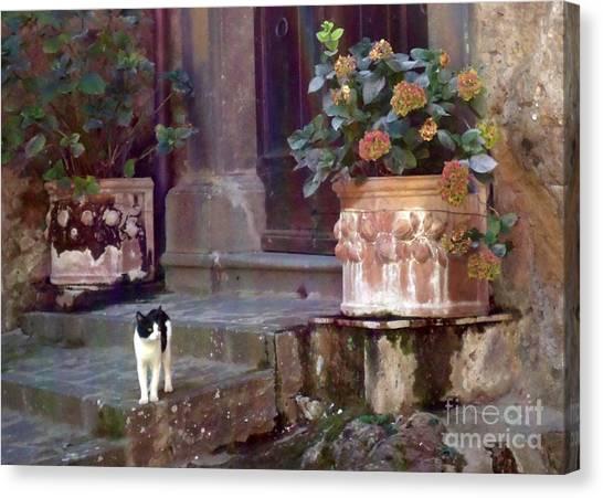 Kitten Italiano Canvas Print