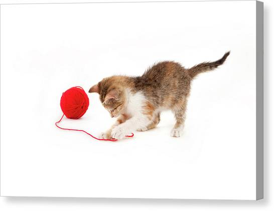 Kitten Playing With A Ball Of Red Wool Canvas Print by By Kerstin Claudia