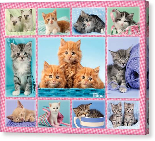Multi Canvas Print - Kittens Gingham Multi-pic by MGL Meiklejohn Graphics Licensing