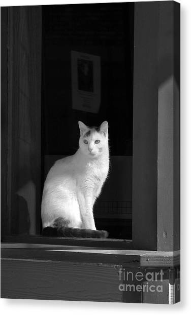 Kitty In The Window Canvas Print