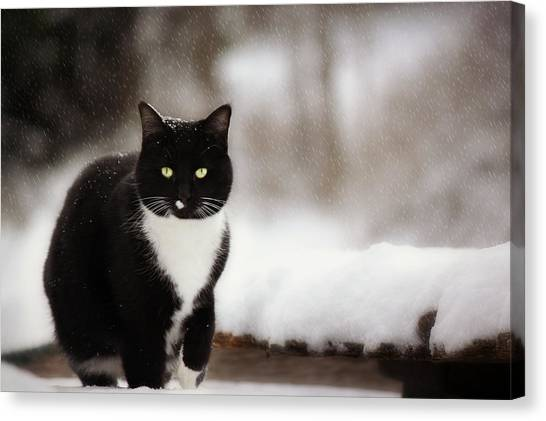 Kitty Snow Play Canvas Print