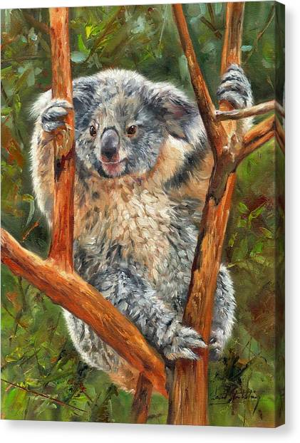 Koala Canvas Print - Koala by David Stribbling