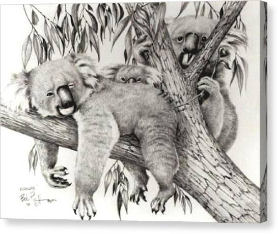Koala Family Canvas Print by Bob Patterson