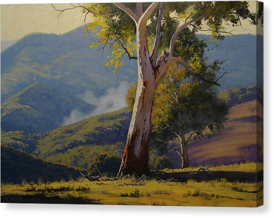 Koala Canvas Print - Koala In The Tree by Graham Gercken