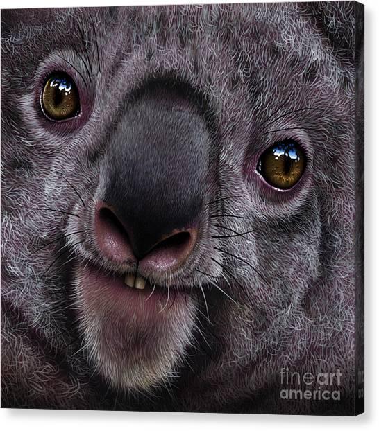 Koala Canvas Print - Koala by Jurek Zamoyski