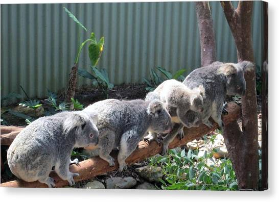 Koala Team Canvas Print